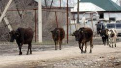 В Таджикистане офицер Комитета национальной безопасности обвинен в воровстве