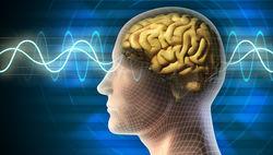 Ученые выяснили, какое влияние имеет алкоголизм на мозг человека