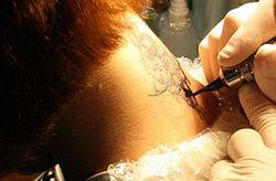 В ЕС бьют тревогу: некоторые чернила для татуировок могут вызвать рак