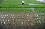 На заметку Киеву: Сельхозугодья Китая отравлены ядохимикатами и металлами