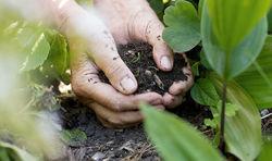 """Эхо дела """"Беларуськалия"""": у Узбекистана могут появиться проблемы со сбытом удобрений"""