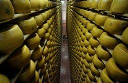 """Достали: """"Милкиленд"""" пригрозил прекратить экспорт украинских сыров в Россию"""
