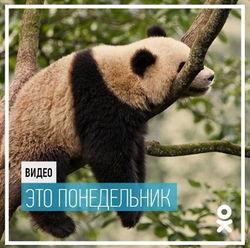 «Одноклассники» представили подборку самых ленивых видео за неделю
