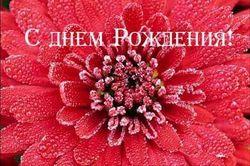 8 декабря – день рождения Алисы Фрейндлих, Ким Бейсингер и Евгения Стеблова