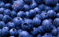 Найдена ягода, продлевающая жизнь – ученые