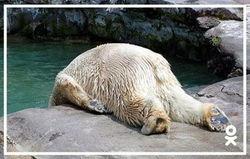 Админы ОК.RU создали подборку смешных фото к тяжелому рабочему дню