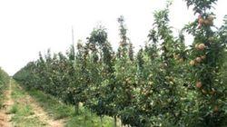 В Узбекистане усилено наказание для фермеров за невыполнение плана