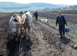 Из-за боевиков у фермеров Донбасса проблемы с полевыми работами и сбытом
