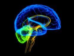 Нейросканирование мозга преступника – оправдательный аргумент адвокатов США