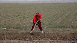 В Узбекистане прогнозируют нехватку воды в сезон орошения полей