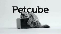 Украинцы собрали на стартап для общения с котами 250 тысяч долларов