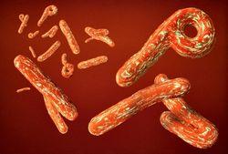 В ВОЗе обеспокоены быстрыми темпами распространения вируса Эбола