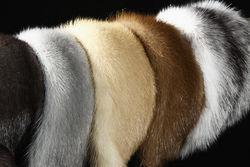 Аrmada Fur Collection - самые лучшие изделия из меха от известного бренда