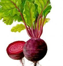 Ученые назвали самые полезные овощи для укрепления сосудов