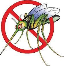 Комары уже не реагируют на «Раптор» и другие популярные средства – ученые
