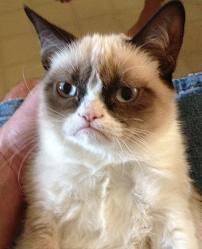 ТОП видео YouTube: сбой генетики кошки - новая порода