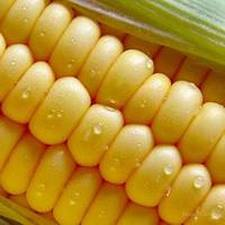 Рынок кукурузы: эксперты представили анализ ноябрьского отчета МСХ США.