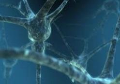 Нервные клетки восстанавливаются – доказано ядерным взрывом