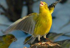 Hi-tech: школьник Уфы расшифровал пение птиц