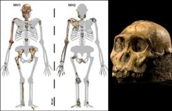Найдены останки самого древнего человека в Западной Европе