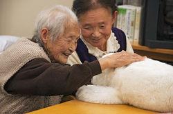 Жительницы Японии опять на первом месте в мире по продолжительности жизни