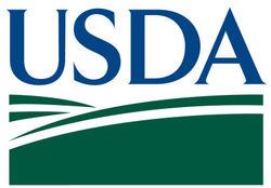 Перед выходом отчетов USDA волатильность рынка кукурузы повысилась - выводы