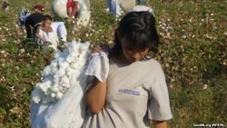 Узбекистану предстоит международный мониторинг процесса сбора хлопка