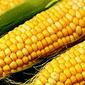 Инвесторам: рынок кукурузы в ожидании выхода отчета USDA