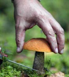 В одном из кафе Хмельницка грибами отравились 16 человек – последствия
