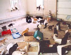 Домашних животных ограничат метражом квартир
