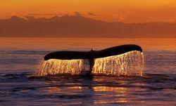 ТОП видео YouTube: в Чили начался массовый мор китов