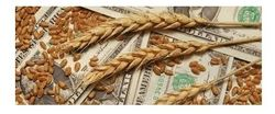Рынок пшеницы находится под давлением из-за низких экспортных продаж США