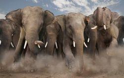 В Индии пьяные слоны разрушили целую деревню