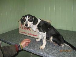 Собаке-инвалиду Люсе в Днепропетровске сделали протезы на колесиках