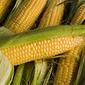 Стоит ли ожидать обвала рынка кукурузы