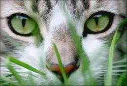 В Коми для доставки мобилок в колонию использовали… кошку