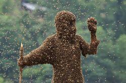 В  Гондурасе депутата насмерть искусали пчелы
