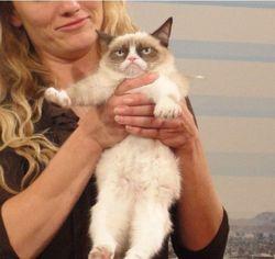 ТОП видео на Youtube: Grumpy Cat экранизируют в полнометражном фильме