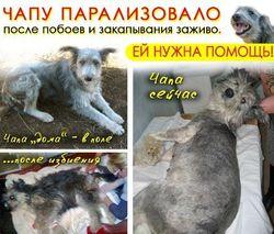 Нравы: На Луганщине догхантеры живьем закопали собаку