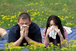 Чем больше достаток в семье, тем выше шансы стать аллергиком – ученые