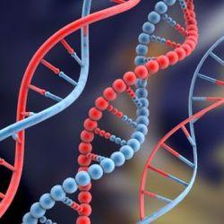 Нанороботы и реальность: ученые заставили ДНК работать самостоятельно