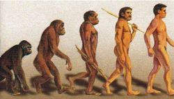 Дарвин был прав: обезьяны умнеют и эволюционируют
