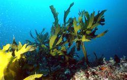 Наука и технологии: немцы заставят водоросли греть их дома