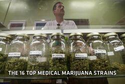 Продажа марихуаны в аптеке