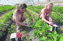 В Польше украинцы работают на стройках, фермах и в школах