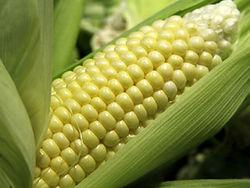 Цену на июльский фьючерс кукурузы по-прежнему поддерживают высокие цены - трейдеры