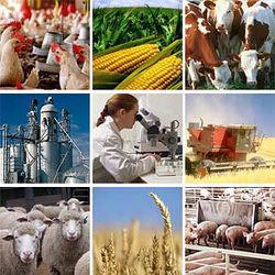Назарбаев призвал реформировать аграрный сектор