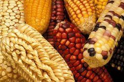 С начала июля кукуруза упала до минимума