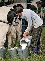 Власти Украины придумали, как подержать молочников