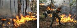Жара в Украине грозит пожарами по всей стране